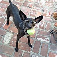 Adopt A Pet :: Buca - Oceanside, CA