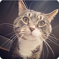 Adopt A Pet :: Tony - Raleigh, NC