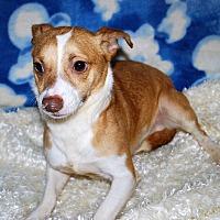 Adopt A Pet :: Lennon - Waupaca, WI