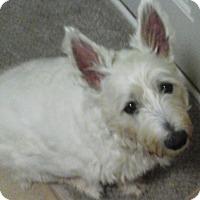 Adopt A Pet :: Abby-Pending Adoption - Omaha, NE