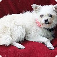 Adopt A Pet :: Cannoli - Dalton, GA