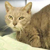 Adopt A Pet :: Laurandrew - Richmond, VA