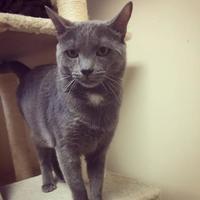 Adopt A Pet :: Derek - Stroudsburg, PA