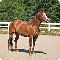 Adopt A Pet :: Kat - Gresham, OR
