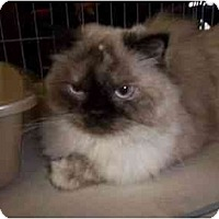 Adopt A Pet :: Mya - Oakland Park, FL