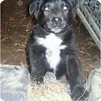Adopt A Pet :: Max - Glenpool, OK