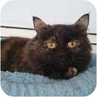 Adopt A Pet :: Gweneviere - Anchorage, AK