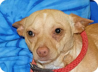 Dachshund Mix Dog for adoption in Spokane, Washington - Donald