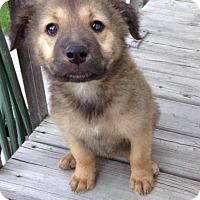 Adopt A Pet :: Bear - Saskatoon, SK