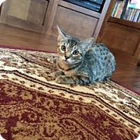 Adopt A Pet :: Ginny - Alamo, CA