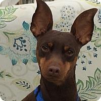 Adopt A Pet :: Kenny - Sacramento, CA