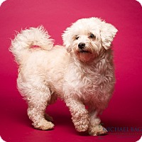 Adopt A Pet :: Kirkwood - MEET HIM! - Norwalk, CT
