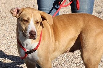 Hound (Unknown Type) Mix Dog for adoption in Clifton, Texas - Roo