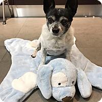 Adopt A Pet :: Oreo - Key Biscayne, FL