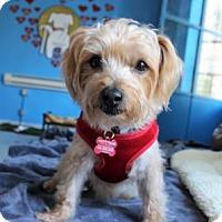 Adopt A Pet :: Joey - San Francisco, CA