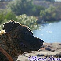 Adopt A Pet :: Felix - Buchanan Dam, TX