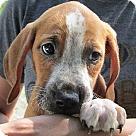 Adopt A Pet :: Diablo