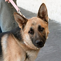 Adopt A Pet :: Major - Palmdale, CA
