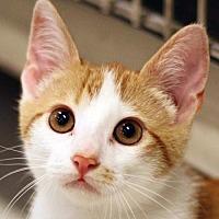 Adopt A Pet :: Jagger - San Diego, CA