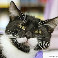 Adopt A Pet :: Bill - Westchester, CA