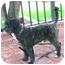 Photo 3 - Maltese/Poodle (Miniature) Mix Dog for adoption in Poway, California - Kokis