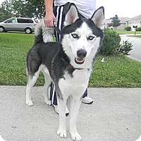 Adopt A Pet :: Max - Jacksonville, FL