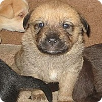 Adopt A Pet :: Slushy - Copperas Cove, TX