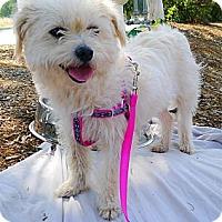 Adopt A Pet :: Izzy easy dog - Sacramento, CA
