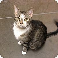 Adopt A Pet :: Vesper - Gilbert, AZ