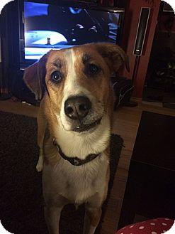 Collie Mix Dog for adoption in Edmonton, Alberta - Ophelia
