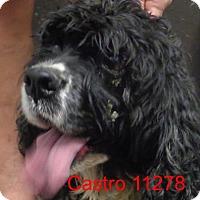 Adopt A Pet :: Castro - Greencastle, NC