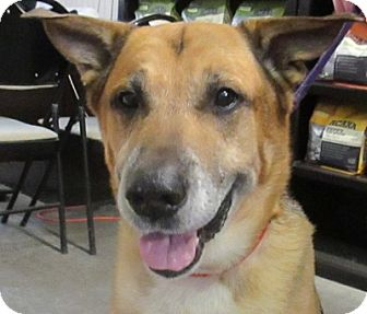 German Shepherd Dog Mix Dog for adoption in Lloydminster, Alberta - Wes