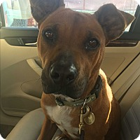Adopt A Pet :: Miley - San Diego, CA