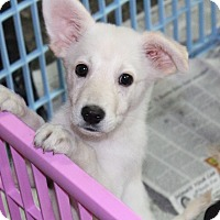 Adopt A Pet :: Nymeria - Millersville, MD