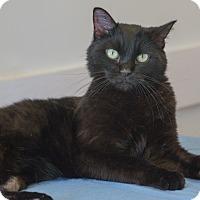 Adopt A Pet :: Destinee - Washburn, WI