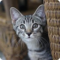Adopt A Pet :: Clyde - Richmond, VA