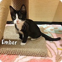Adopt A Pet :: Ember - Foothill Ranch, CA