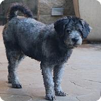 Adopt A Pet :: Mr. Bojangles - Woonsocket, RI