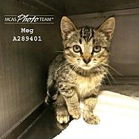 Adopt A Pet :: MEG - Conroe, TX