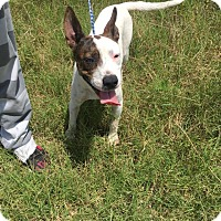 Adopt A Pet :: Bobo - Columbia, TN