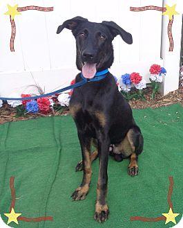 Doberman Pinscher Mix Dog for adoption in Marietta, Georgia - ELVIS - adopted @ off-site
