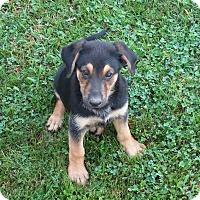 Adopt A Pet :: Otto - New Oxford, PA