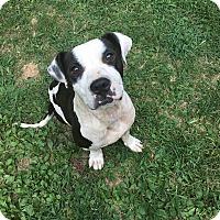 Labrador Retriever Mix Dog for adoption in Southbury, Connecticut - Stormy - tripaw!
