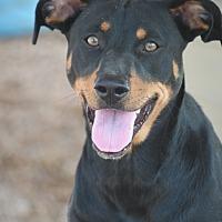 Adopt A Pet :: Maylie - Cranston, RI