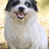 Adopt A Pet :: Clyde - Cashiers, NC