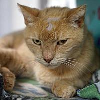 Adopt A Pet :: Leroy - Tucson, AZ