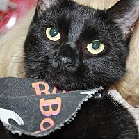 Adopt A Pet :: GERRY - Clayton, NJ