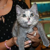 Adopt A Pet :: Colt - Rochester, MN