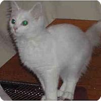 Adopt A Pet :: Adorable Angel - cincinnati, OH