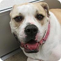 Adopt A Pet :: Lulu - Gilbert, AZ